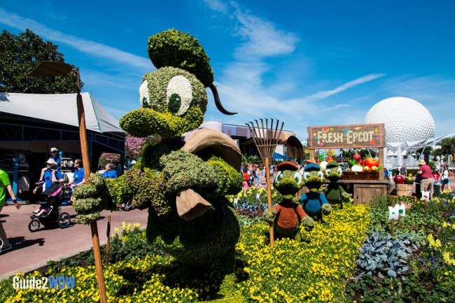 Donald and Nephews - Topiaries at the Epcot Flower and Garden Festival