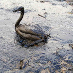 What new product lessons can we learn from BP's oil spill