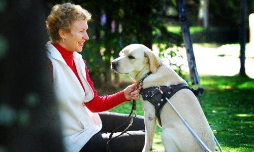 South African Guide-Dogs Association For The Blind Guide Dog Owner With Guide Dog In Harness