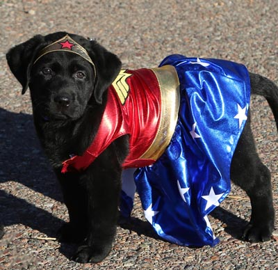 Guide Dog Puppy Hero