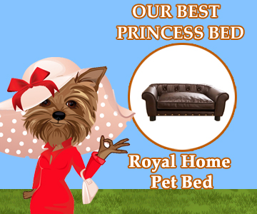 Our Best Princess Bed for Dog