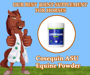 Our Best Best Joint Supplement for Horses