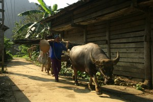 Excursion a Hanoi