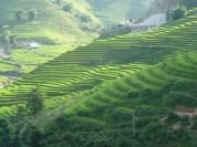 Rizieres en terrasse de Sapa