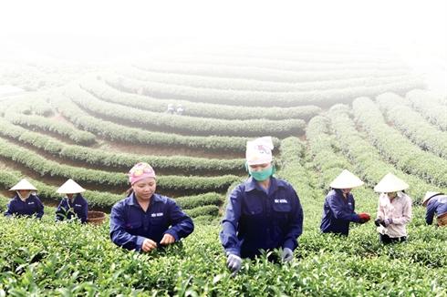 the vert vietnamien