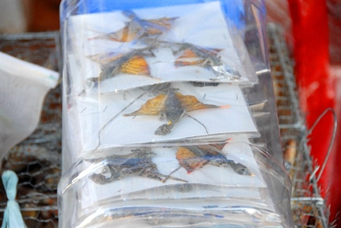 marche d'insectes au Vietnam_5