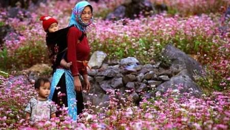 la-saison-de-la-fleur-de-sarrasin