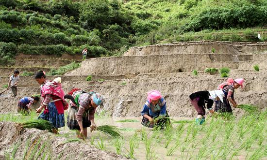 porte bebe montagne nord vietnam travail.jpg