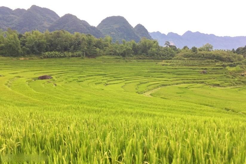 que voir reserve naturelle pu luong riziere.jpg