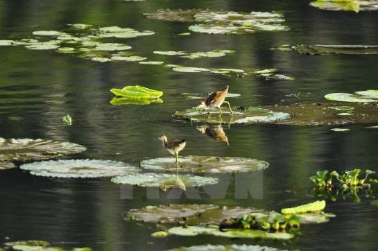 oiseaux van long