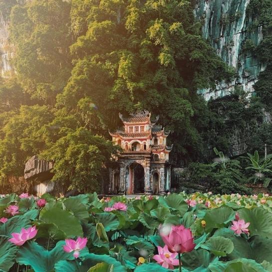saison de lotus pagode de jade