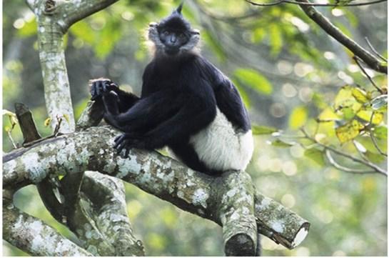primates au parc national de cuc phuong