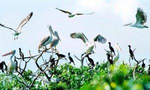 Le parc aux oiseaux de Bac Lieu