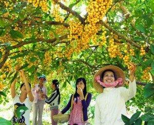 Cù lao Tân Phong