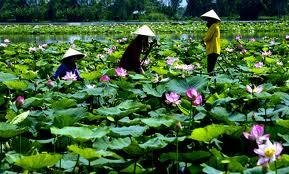 Guide francophone au Vietnam Hanoi Saigon Hue Sapa
