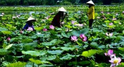 La province de Dong Thap