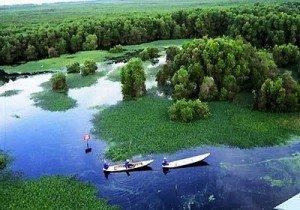 La forêt d'U Minh