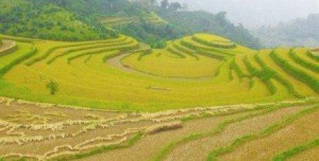 Des rizières en gradins dans l'objectif d'un randonneur.