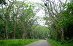Le parc national Cuc Phuong