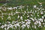 Le jardin aux cigognes de Thap Muoi