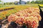 Le jardin de fleurs de Tan Quy Dong