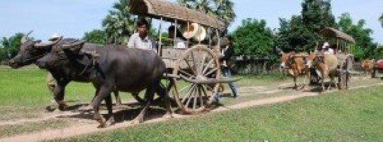 Balades en charettes au buffle au delta Mekong