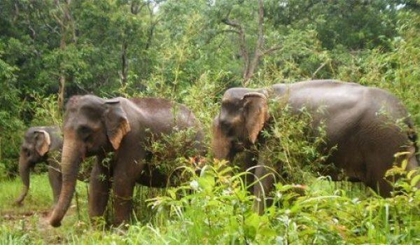 Voyage Mondolkiri Cambodge