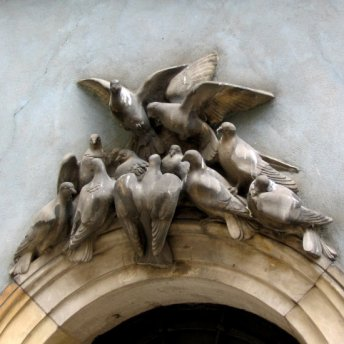 Pigeons have sat down over an entrance to one of the Old Town's houses.