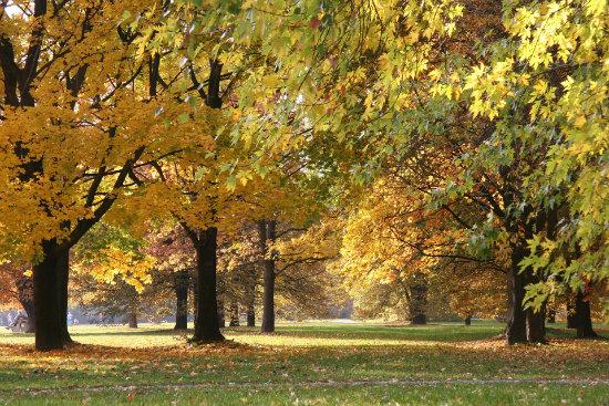 Odkryj piękno mazowieckich krajobrazów również jesienią.