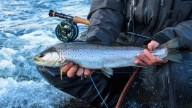 RaintroutFly-kust-spring-2017-6