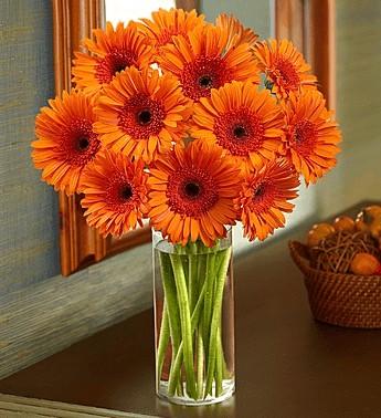 valentines-orange-gerberas