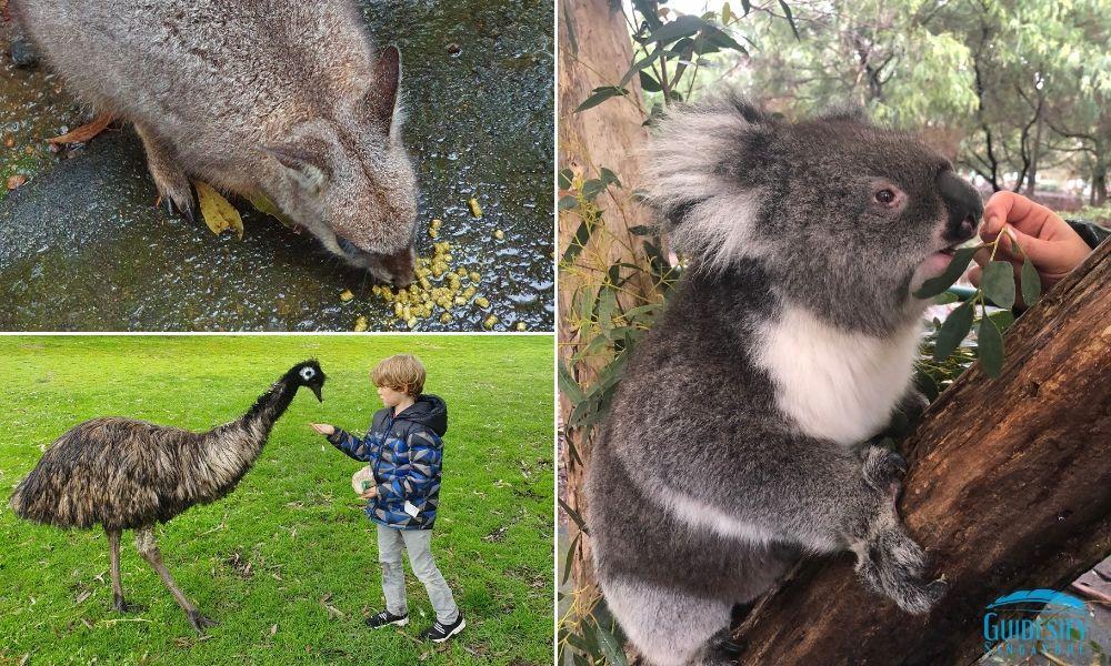 Cleland Wildlife Park Adelaide