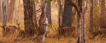 places to visit in Dibrugarh