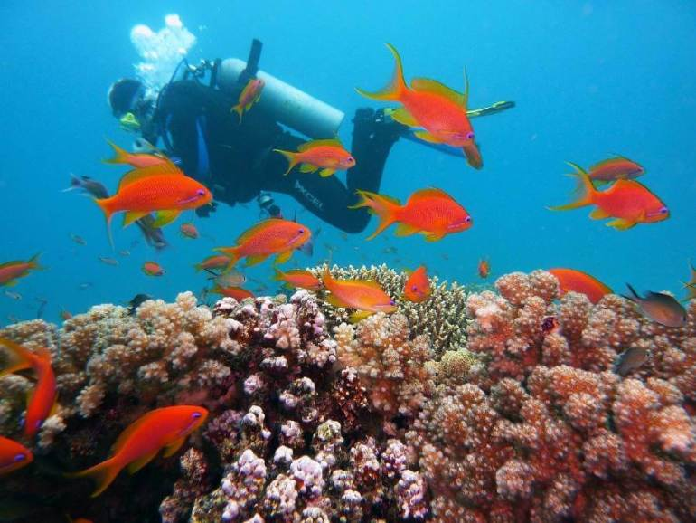 Diving in Egypt - Best Beaches in the Middle East & Africa
