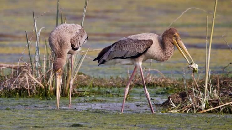 Bharatpur Wildlife Sanctuary