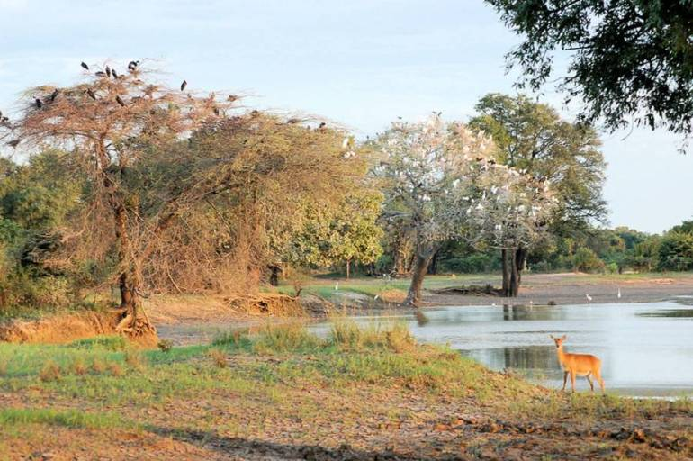South Luangwa National Park - Activities To Enjoy In Zambia