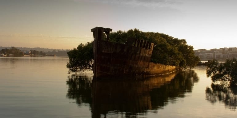 The remains of the SS Ayrfield in Homebush Bay