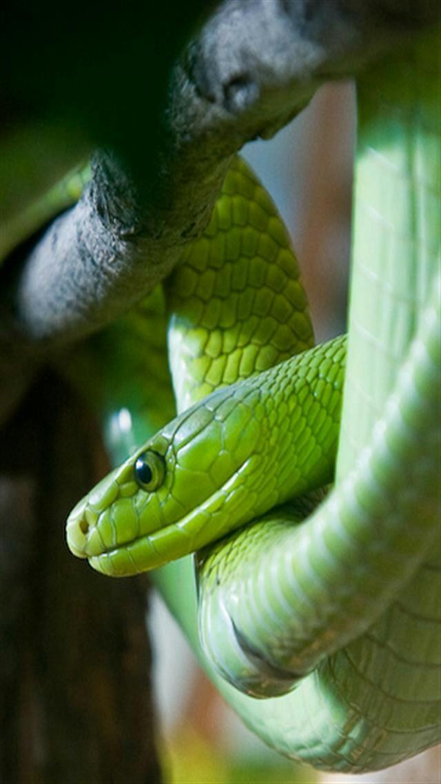 snake-30-1662337667