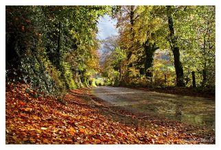 Wicklow, Irlanda. 2015 © Guido Balduzzi – All rights reserved.