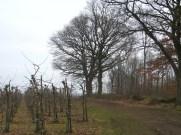 Op de Wijngaardberg