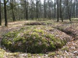 Grafveld Het Heike, met 12 gerestaureerde graven uit de late bronstijd tot in de vroege ijzertijd (1100-475/450 v. Chr.)