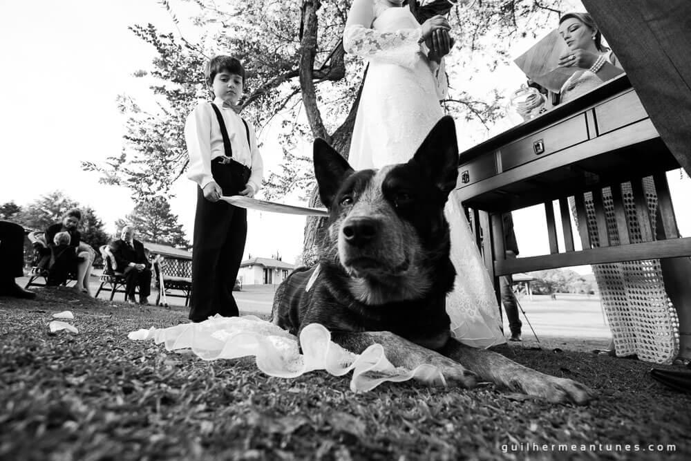 Fotógrafos de casamento em Joinville