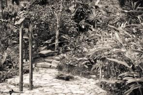 Vieux-Habitants-Habitation la Griveliere