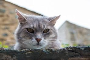 The Cat - Olette-Evol - Pyrénées
