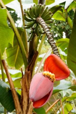 nature_Guadeloupe-2019-106