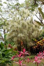 nature_Guadeloupe-2019-107