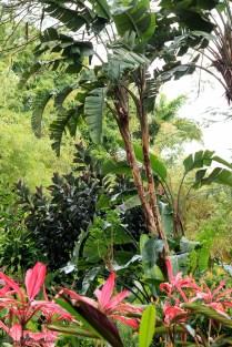 nature_Guadeloupe-2019-108