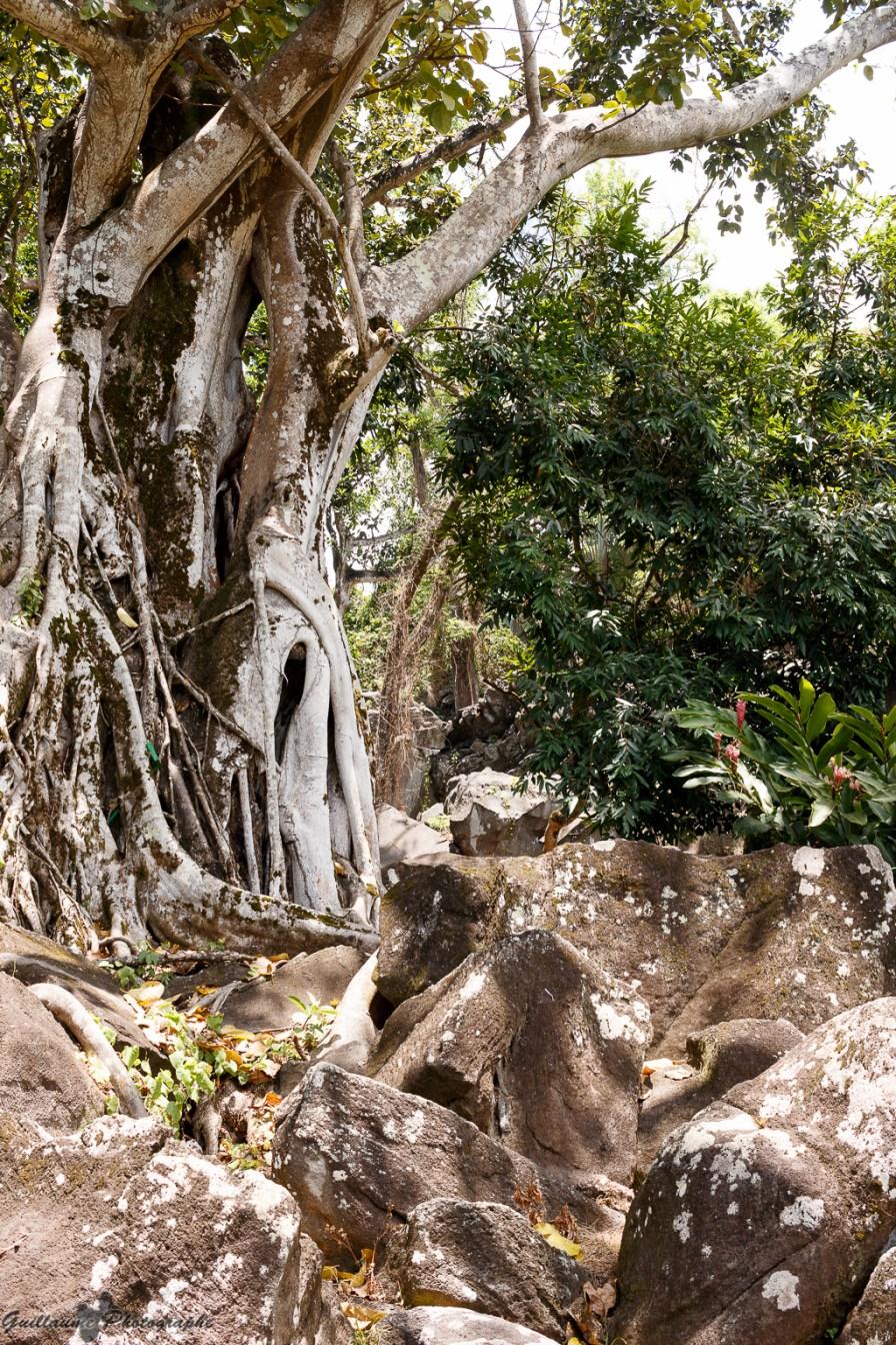 nature_Guadeloupe-2019-12