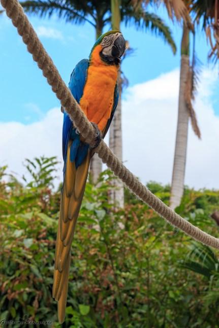 nature_Guadeloupe-2019-121