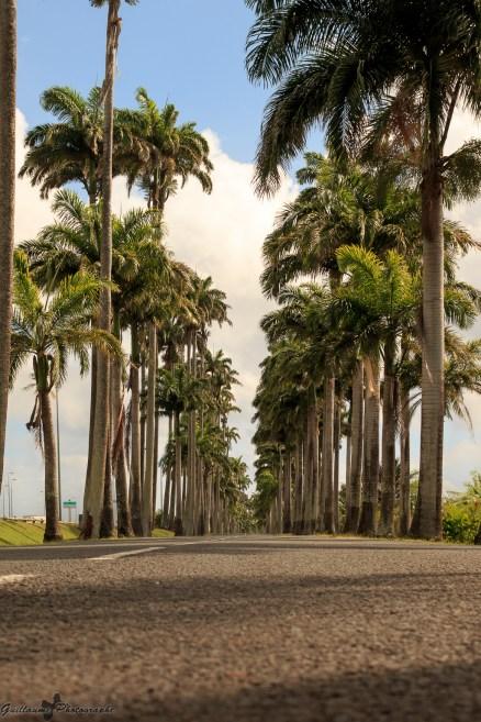 nature_Guadeloupe-2019-130